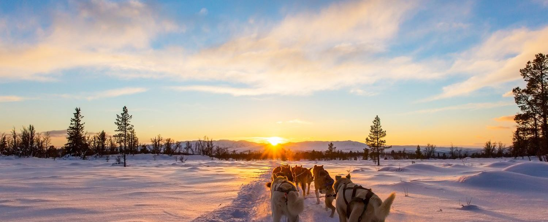 big sky for non-skiers, dog sledding