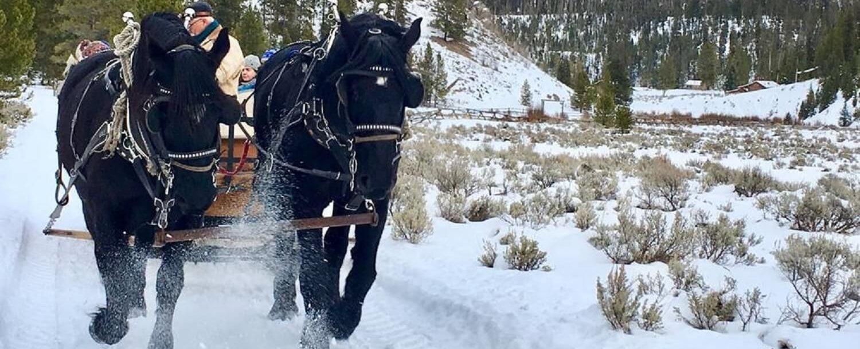Sleigh Ride in Yellowstone