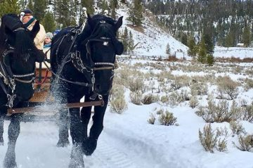 Sleigh Ride in Yellowstone